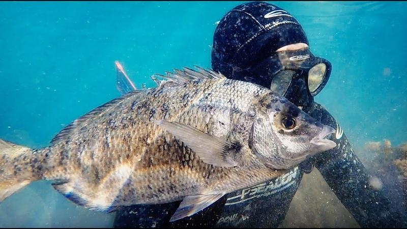 Indienne Technique de chasse sous marine Gros Sar Par petit fond