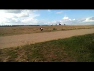 Спасенный аист учится летать