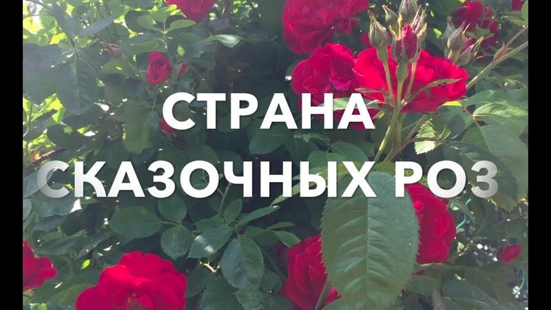 🌍СТРАНА СКАЗОЧНЫХ РОЗ COUNTRY OF FAIRY ROSES