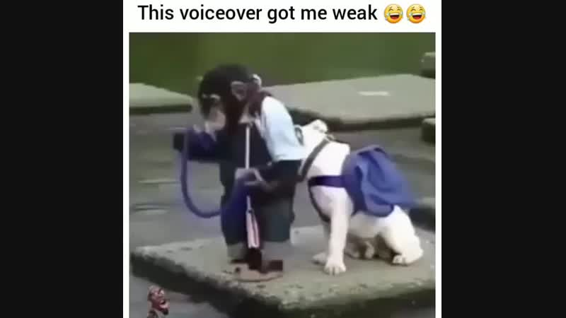 The poor dog can't jump😅🤣😅