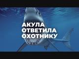 Акула ответила охотнику