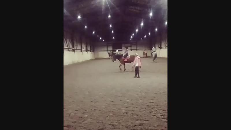 Конная езда