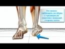 Биомеханика распространённой ходьбы