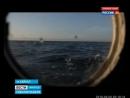 Учатся считать нерпу по голосу иркутские и французские ученые на Байкале