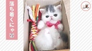 小さな空間にすっぽり♡ 子猫ちゃんの秘密基地♪【PECO TV】