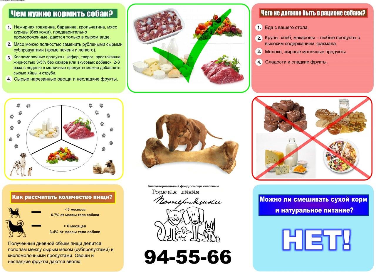 Чем кормить собак в домашних условиях натуральной едой - Интернет магазин рукоделия Овца Рукодельница, все для
