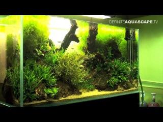 Aquascaping - Planted aquarium 120x60x60