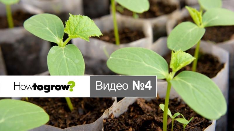 Применение ингибиторов роста для огурцов