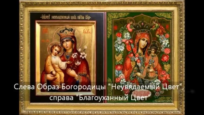 Икона Божией Матери Благоуханный Цвет. История обретения, молитва и величание