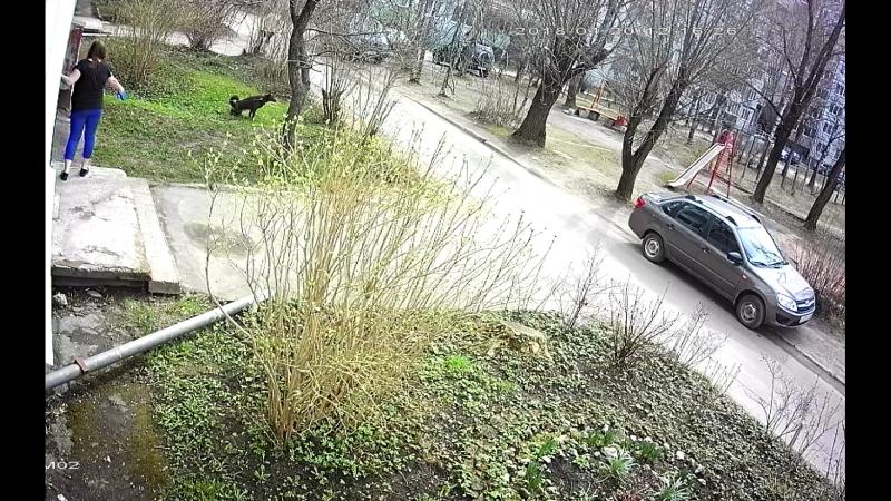 собака без намордника гадит у дома и бросается на людей 20.04.2018 в 12-16