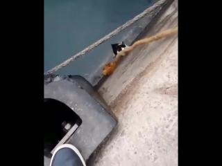 Спасение кошки, упавшей в воду