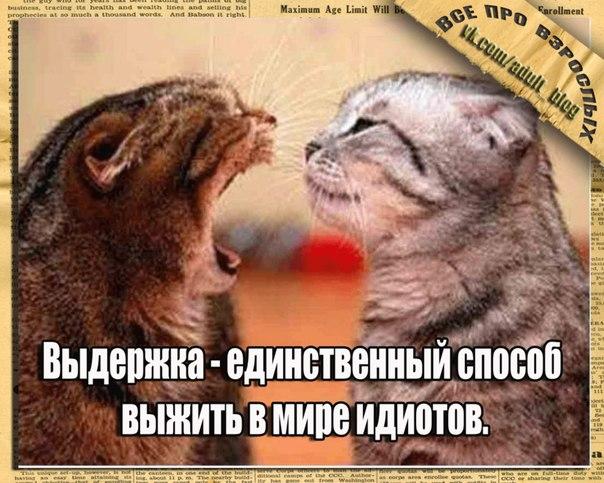 Кошачий юмор - Страница 5 U8w9IIx6OZU