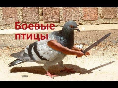 Боевые птицы. ТОП приколы