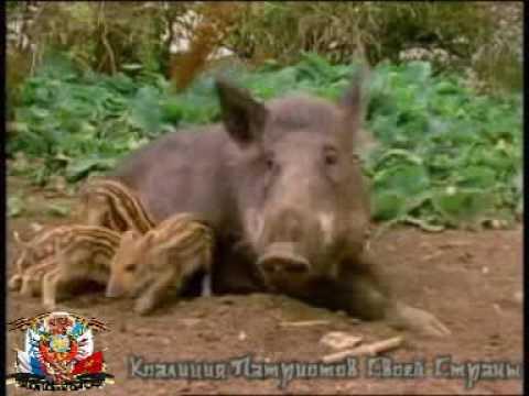 В мире ТВЕРСКИХ животных.