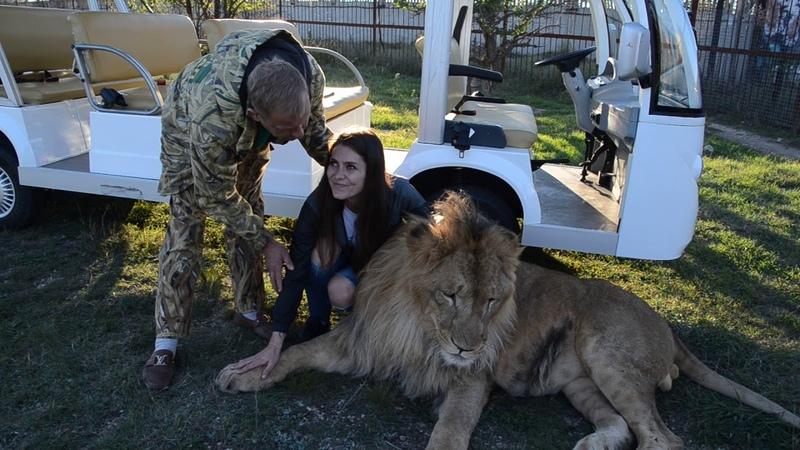 Гламурный ,танцующий лев Олегжка !