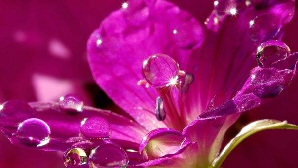 """Цветы глядят с тоской влюбленной, Безгрешно чисты, как весна, Роняя с пылью благовонной Плодов румяных семена. Сестра цветов, подруга розы, Очами в очи мне взгляни, Навей живительные грезы И в сердце песню зарони. /отрывок из стихотворения """"Цветы"""" А.Фета/"""