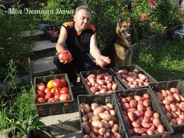 4 ВИДА ПОДКОРМОК, ИСПОЛЬЗУЕМЫХ ИГОРЕМ ЛЯДОВЫМ 1. Я считаю, что каждый земледелец может самостоятельно готовить для себя микробные препараты, почти столь же разнообразные по составу, как