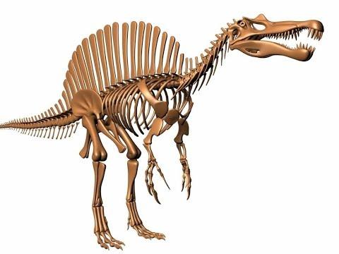 Фил сам снимает раскопки спинозавра