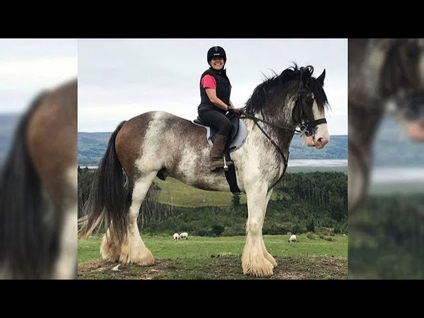 Cute And funny horse Videos Compilation cute moment of the horses - Soo Cute! 38