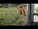 Эмоции животных которые вышли на свободу из цирка