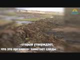В Темрюкском районе слив автомоек отравляет почву
