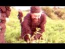 Спасение морковки, или бой с сорняками