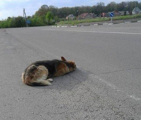 Жестокость в Марий Эл: хозяева бросили собаку с одеялом на трассе.