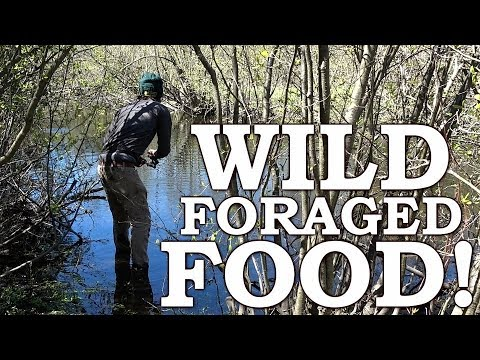 WILD FOOD SURVIVAL CHALLENGE | SPRING EDIBLES Over OPEN FIRE | BURDOCK, LEAKS, THISTLE MAPLE SYRUP