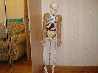 как собрать скелета артема инструкция - фото 8