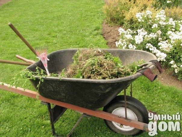 КАК ПРЕВРАТИТЬ СКОШЕННУЮ ТРАВУ В КОМПОСТ ИЛИ МУЛЬЧУ Всем любителям газонов интересно, куда девать скошенную траву. Ведь от неё не обязательно избавляться – она вполне может принести ощутимую пользу садовой почве и растениям. Ведь скошенная трава – самый лучший материал для компоста. Не стоит оставлять скошенную траву неубранной на газоне, ведь она может стать причиной появления неопрятных жёлтых пятен на газоне. Это не касается обладателей газонокосилок, срезающих траву, дробя её на мелкие…