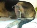 Собаки с оскольчатым переломом голени