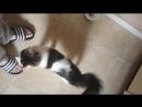 Koty proszą o ulubione jedzenie Skorpion to ja