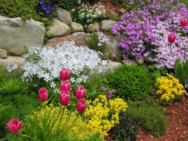 Многолетники для Ваших цветников