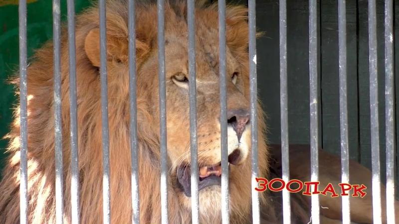 Зоопарк приехал в Касли