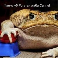 Видео канал пользователя Рогатая Жаба - ZadrotTV ru