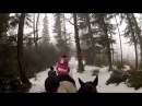Horse ride in the forest