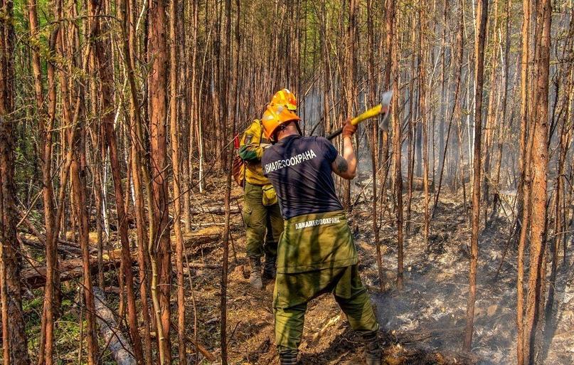 Ситуация с лесными пожарами в целом по стране находится под контролем. Сложная о...