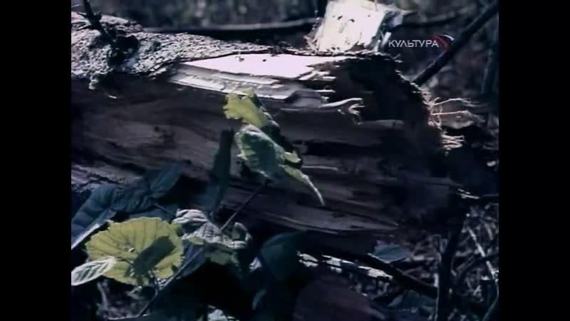 «Андрей и злой чародей» (1981) - сказка, реж. Геннадий Харлан