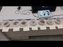 2рой день эксперимента с пшеницей. Обработка катушками-Мишина