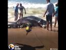 Скат попал в рыболовные сети