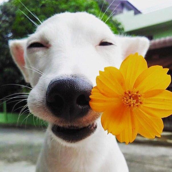 добрый пес с цветочком