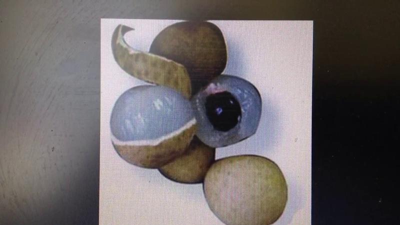 Сажаю экзотический фрукт Лонган который должна полюбить каждая женщина