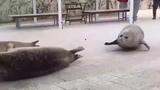 I loveeeee seals