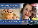 Китайский метод выращивания картофеля 24 кг с клубня