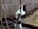 Кот танцует стриптис.
