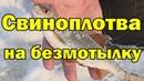 ЛУЧШАЯ БЕЗМОТЫЛКА на плотву Свиноплотва атакует Зимняя рыбалка