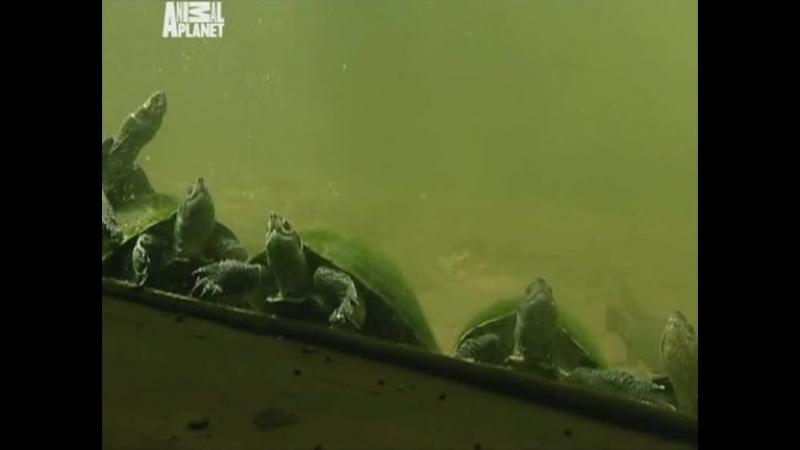 Необычные животные Ника Бейкера / Марсианский крокодил