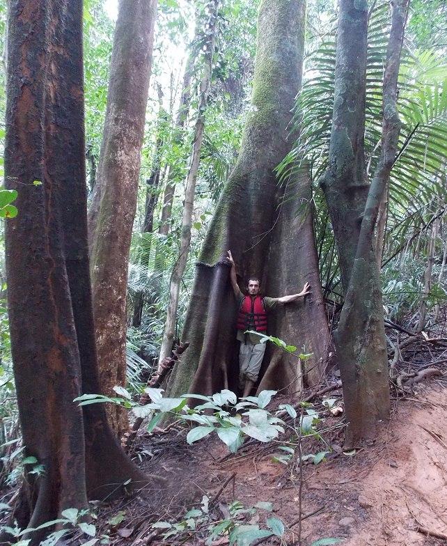здоровенное дерево на подъеме на водопад