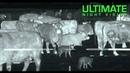 Охота на Волков/Койотов с Тепловизором Thermal Predator Hunting   45 Coyotes Down with the IR Hunter