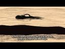 The Old Crocodile El viejo Cocodrilo 年をとった鰐 Toshi o Totta Wani de Koji Yamamura